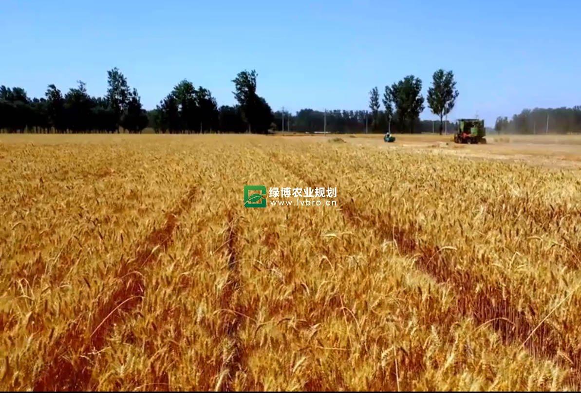 山东鄄城大舜有机农业产业园区探访