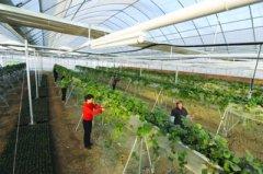 长丰县现代农业生态示范园项目招商