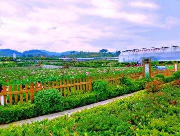 创意助力南京市休闲农业升级