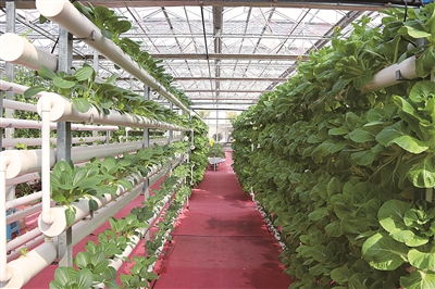 江苏省滨海现代农业产业园区