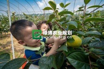 富阳特色精品农业助力乡村振兴产业兴旺