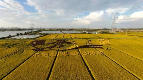 苏州吴江区推动休闲农业和乡村旅游市场发展